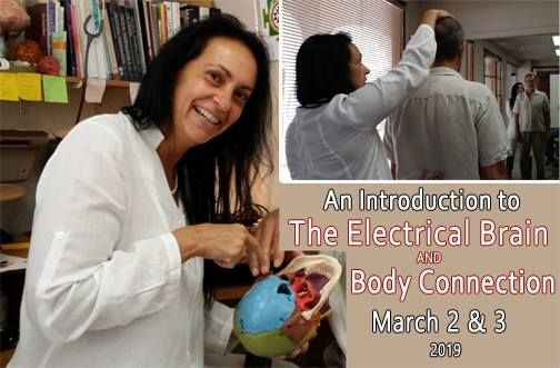 Introduction to The Electrical Brain & Body Connection