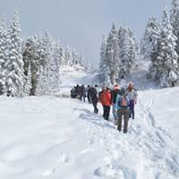 Mt Seymour Snowshoeing