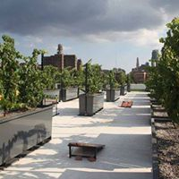 Tour &amp Wine Tasting at Rooftop Reds the Worlds First Rooftop Vineyard