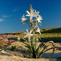 Thursday Artist Talk on Flower Photography