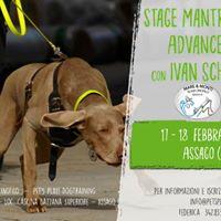 Stage di Mantrailing Advanced I con Ivan Schmidt