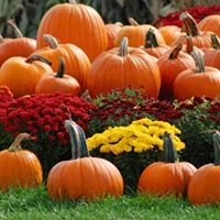D. Kays Waffles will be at the Country Pumpkin Festival