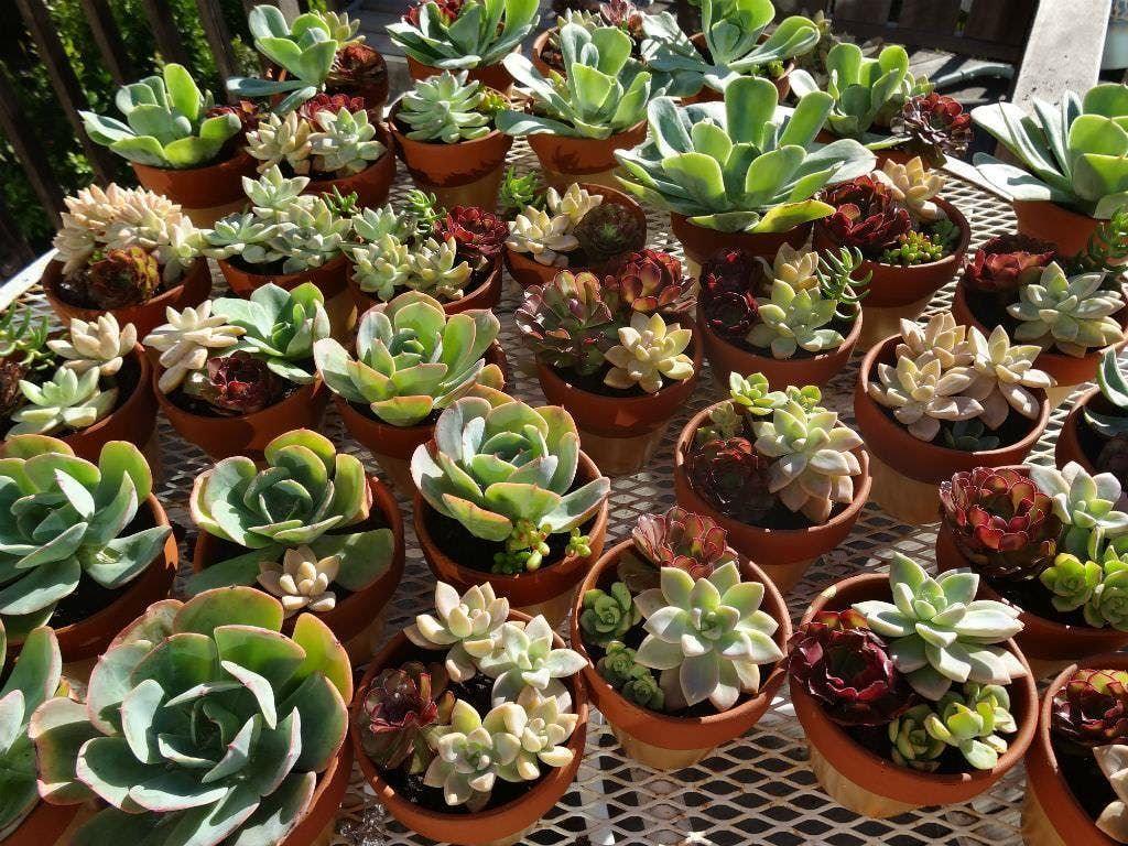Pint Glass Succulent Arrange & Sip