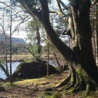 Bards In The Woods - Union Wood Collooney entrance Co. Sligo