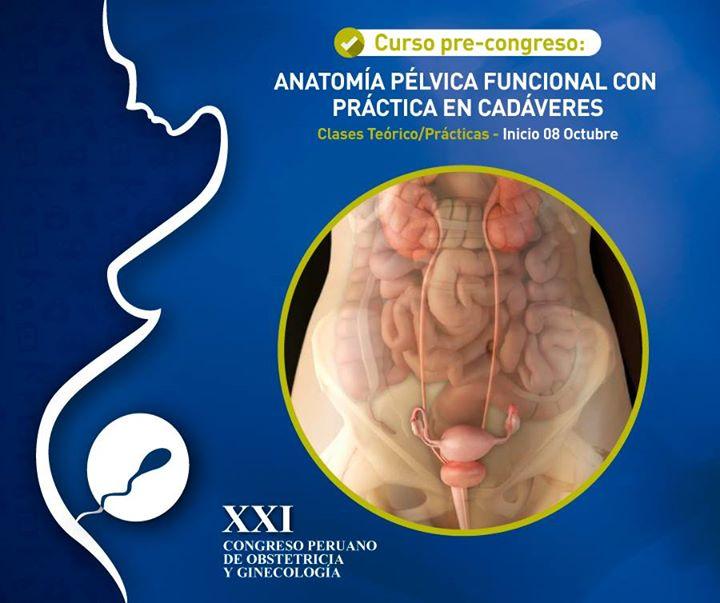 Curso de Anatomia Pelvica - UroGinecología at Hospital Nacional ...