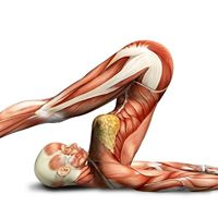 Anatomy for Yoga CPD course &amp Workshop