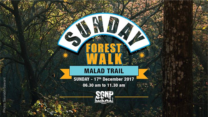 Sunday Forest Walk at Malad Trail