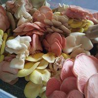 Geelong Mushrooms to Mushrooms Workshop