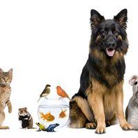 Corso Da Pet Sitter Professionista