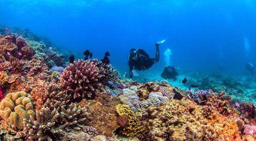 Brisbane - Double Dive at Flinders Reef