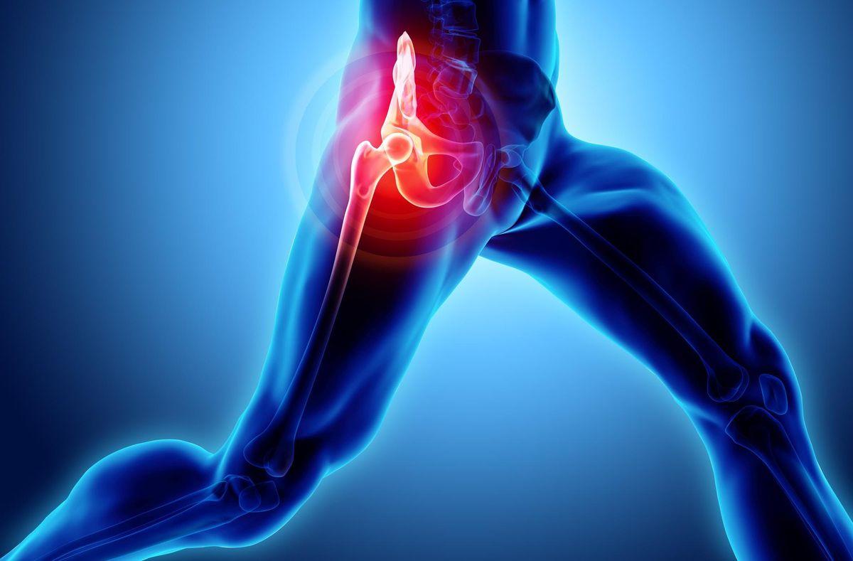 2019 MOR Hip Symposium Hip Anatomy Biomechanics and Rehabilitation