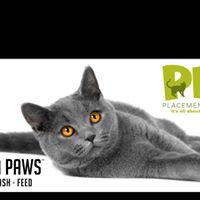 PPC Cat &amp Kitten Adoptions