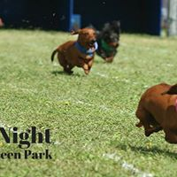 Race Night at Curraheen Park