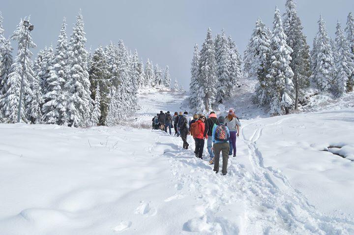 Mt Seymour Snowshoeing