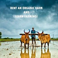 Rent an Organic Farm and Harvest Your Own Crops