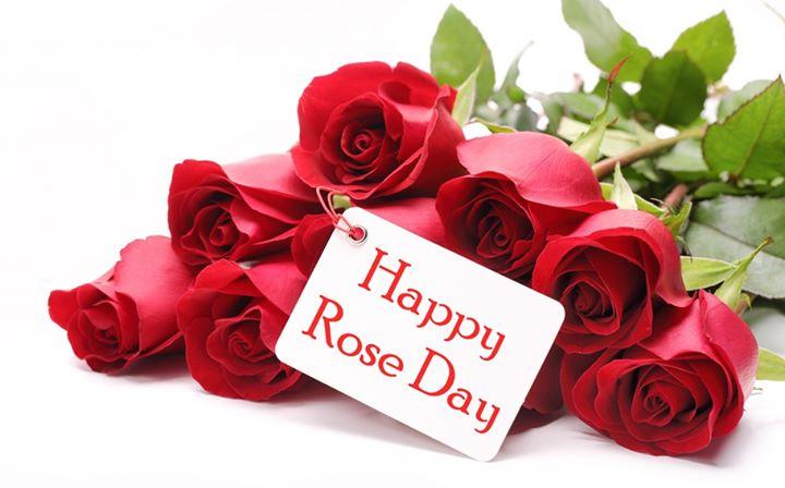 National RED ROSE Day Celebration