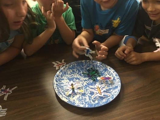Insectigations Day Camp At Lime Creek Nature Centercerro Gordo
