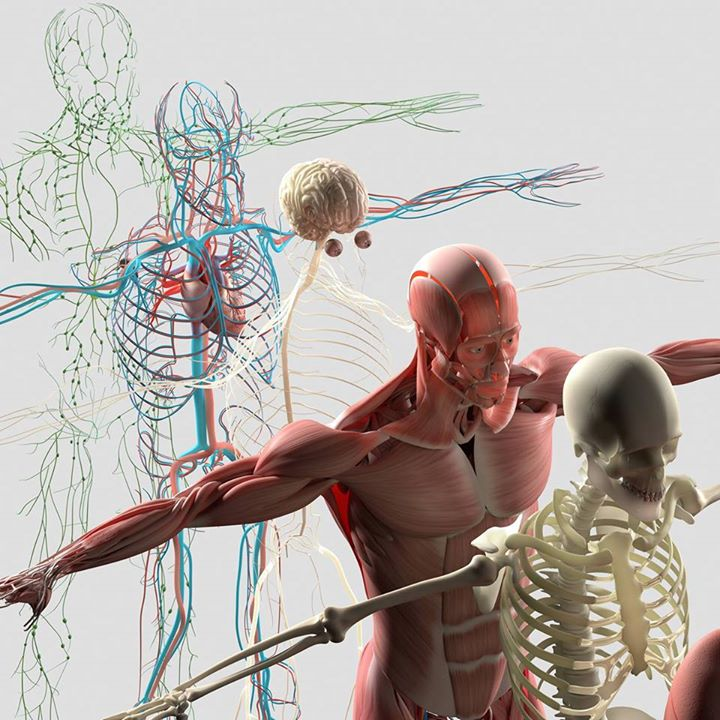 Holistic Anatomy and Physiology of Yoga - Stress and Pain at The ...