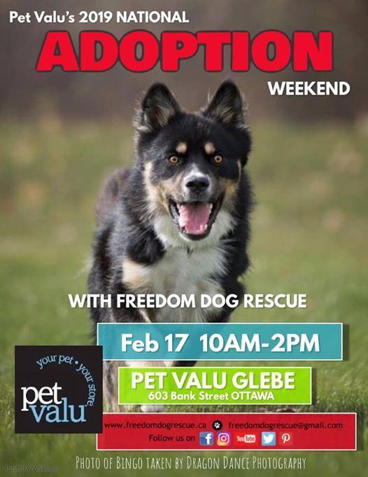 Freedom Dog Rescue at Pet Valu Glebe