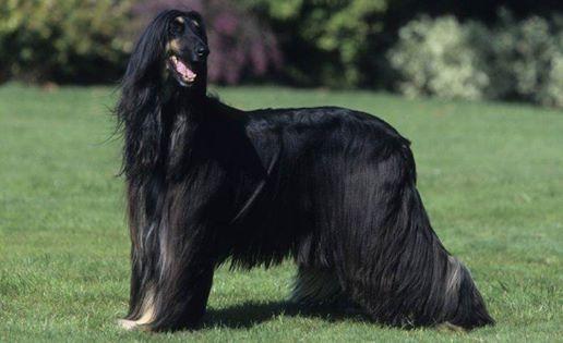 RIMANDATOorigini dei cani moderni e loro caratteristiche attuali