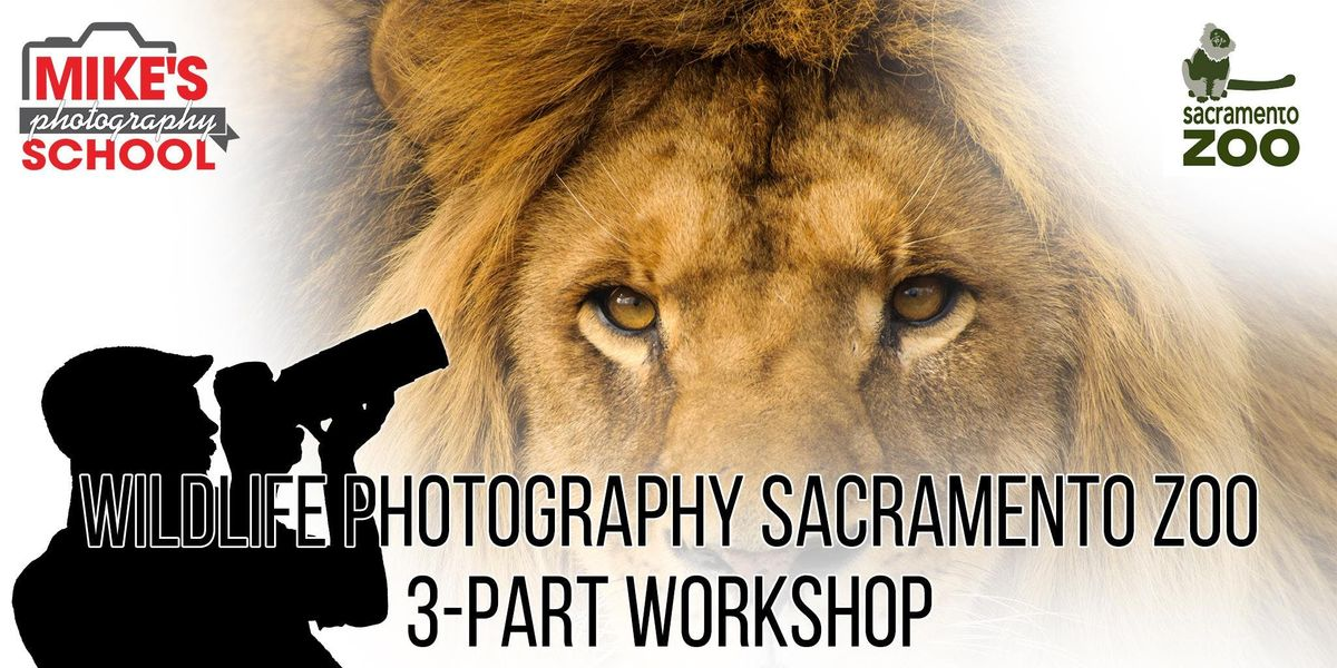 Wildlife Photography Sacramento Zoo- 3-Part Workshop