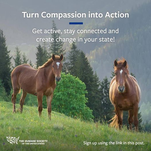 Turn Compassion for Animals into Action in Duluth MN
