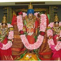 Tulasi Kalyanam Celebrations