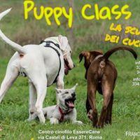 Puppy Class - La scuola dei cuccioli