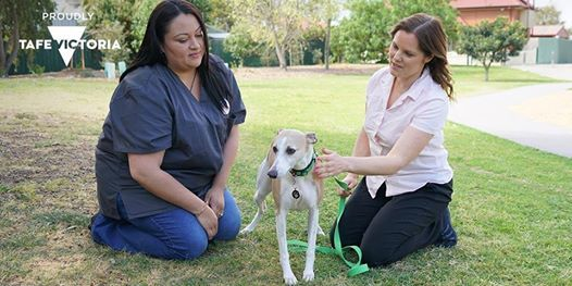 Information Session Animal Studies Vet Nursing and Lab Sciences