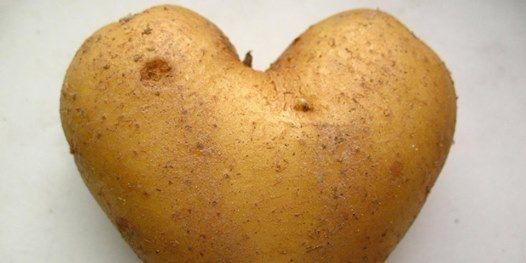 How to Grow Potatoes Asparagus Horseradish and Rhubarb
