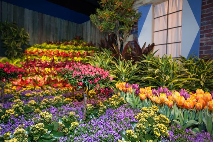 2017 Chicago Flower Show Trip At Navy Pier Chicago