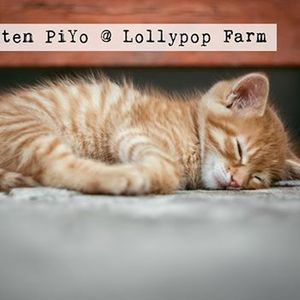 Kitten Whisker events in the City  Top Upcoming Events for