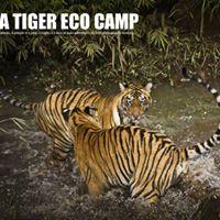 Tadoba Tiger Eco Camp - April 2018