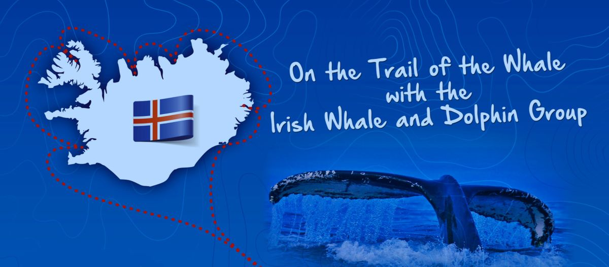 On The Trail of the Whale Library Tour - Location Castlebar