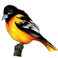 Book Launch for Owen the Oriole