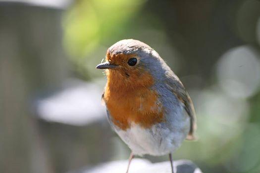 Bird Watching at Dublin Zoo