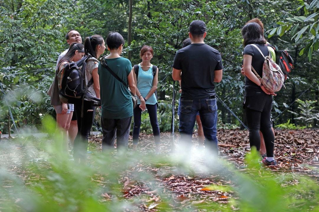Forest Bathing 5-week Immersion Course (16 June - 14 July 2018)