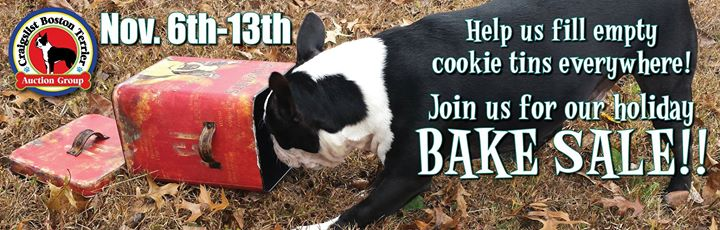 Boston Terrier For Sale Craigslist - petfinder