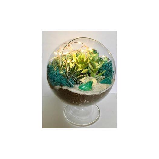 Plant Nite Fairy Light Succulent Terrarium Flying Bison 3 28 At