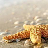 Sullivan Starfish Mission Fun - Raiser