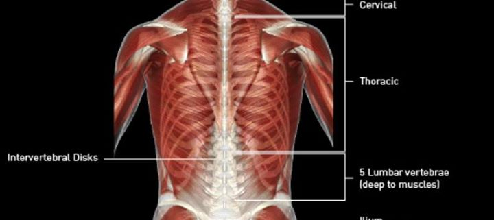 Yoga Functional Anatomy Module 2: Core + Spine at Essential Hot Yoga ...