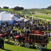 2017 Scott Group of Companies Mount Gambier Gold Cup