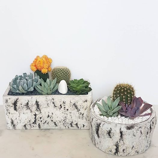 SOLD OUT Succulents & Shopping at Real Deals on Home Decor