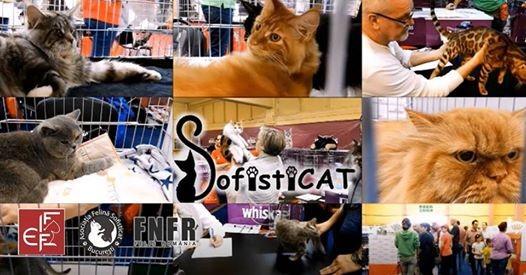 SofistiCat Autumn International Cat Show