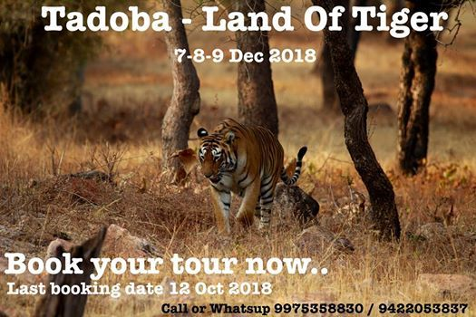 Tadoba - Land Of Tiger