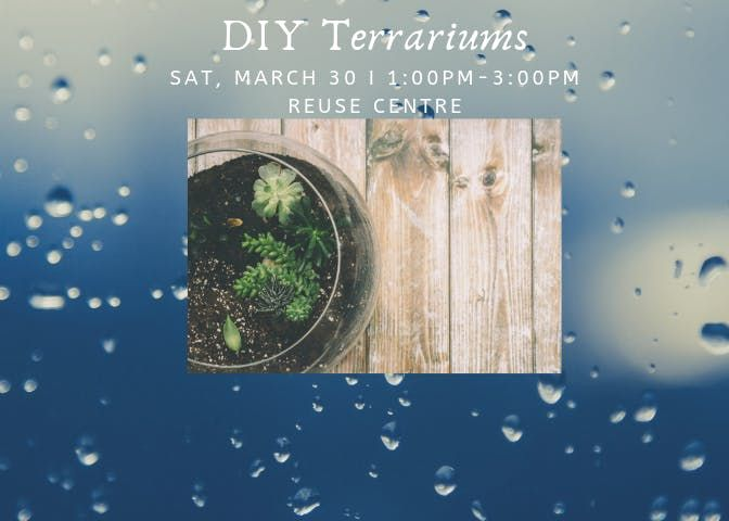 Diy Terrariums At City Of Edmonton Reuse Centre Edmonton