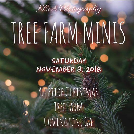 Tree Farm Minis - Tree Farm Minis At Yuletide Christmas Tree Farm1175 Penland Rd