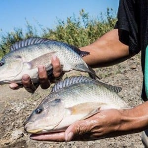 Harare Fish Farming Training