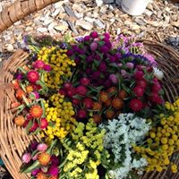Sign up to be a Village Gardener at the Enfield Shaker Museum