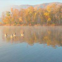IJAMS Beginner Birding Winter Ducks at Cove Lake